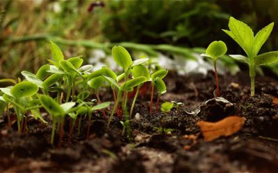 Le guide du potager en permaculture