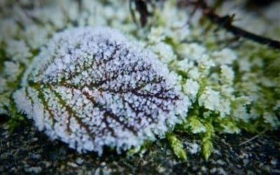 Conseils pour préparer son jardin à l'hiver