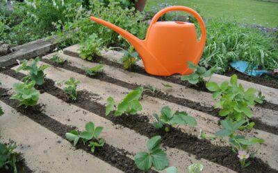 Quel terreau et engrais pour planter des fraisiers ?