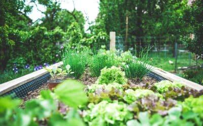 Comment choisir sa bordure de jardin ?